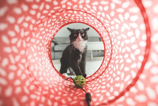 Cat Toy Safety Testing