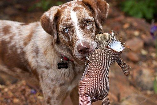 Dog Toy Durability Testing